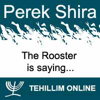 Perek Shira : The Rooster is saying