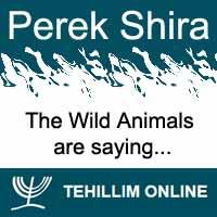 Perek Shira : The Wild Animals are saying